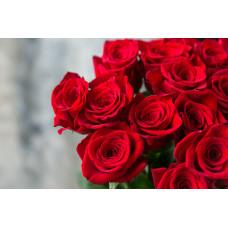 Розы Фридом